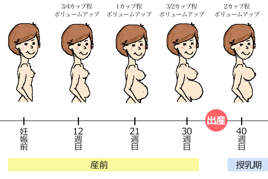 授乳期にかけて胸が膨らんでいく過程
