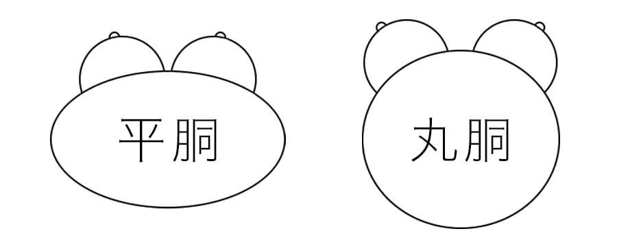 丸胴体型と平胴体型の比較イラスト