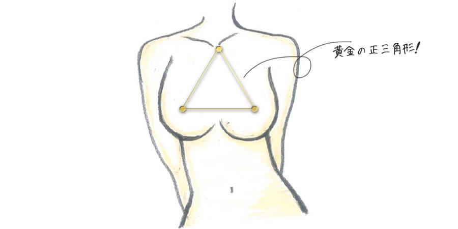 バストの黄金の三角形の説明画像