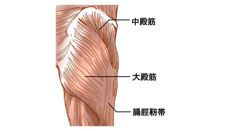 大臀筋と中臀筋のイラスト