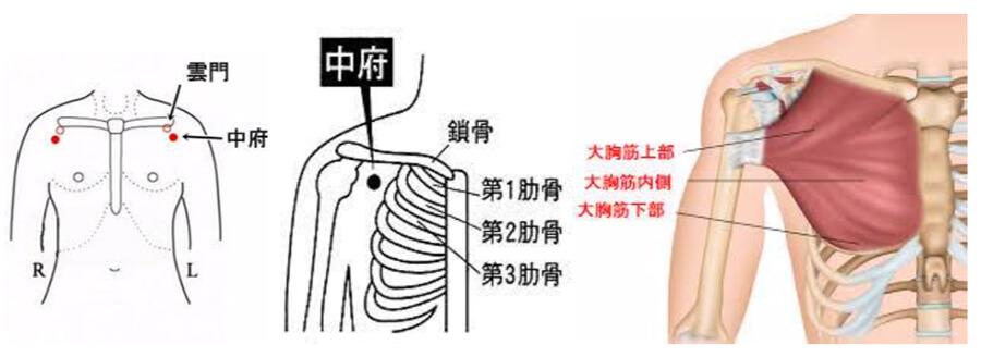 バスト周辺の血流改善でバストアップする中府(ちゅうふ)